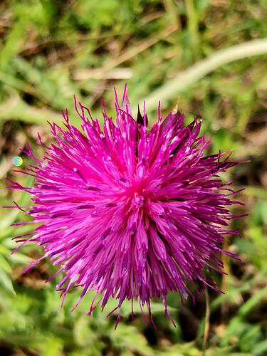 FMC188 Flower 3