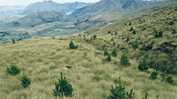 wilding-pines-hero