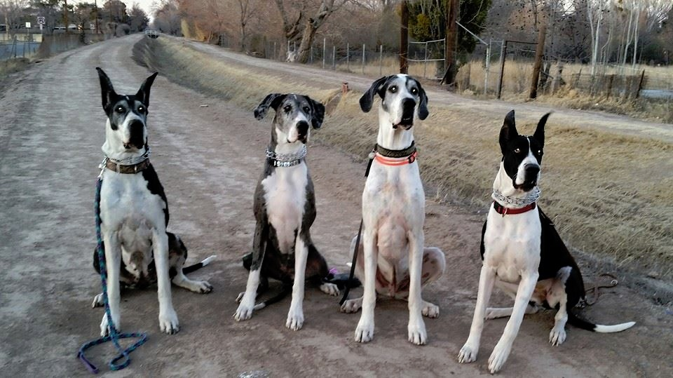 Our_Dogs Jan-2015